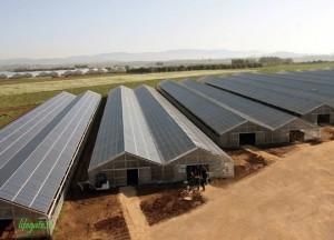 serra fotovoltaica