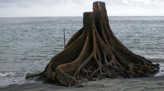 Oceano o foresta
