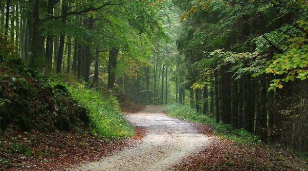 Foreste Veneto